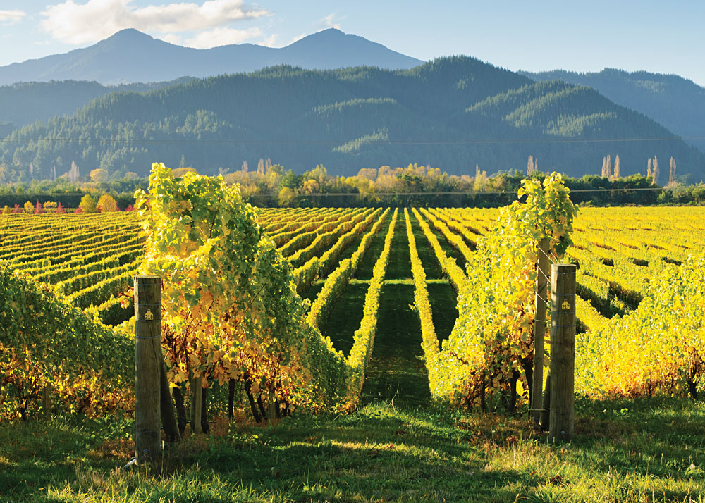 Vineyards-in-the-Marlborough-District-South-Island-New-Zealand_108990056